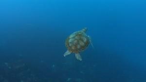 20171231伊豆海洋公園1
