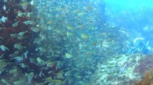 20180107伊豆海洋公園4