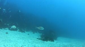 20180107伊豆海洋公園6
