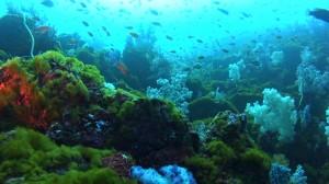 20180114伊豆海洋公園5