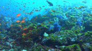 20180114伊豆海洋公園6