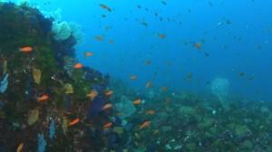 20180128伊豆海洋公園