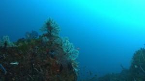 20180128伊豆海洋公園11