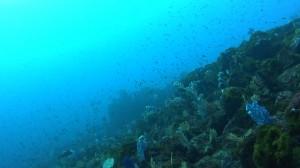 20180212伊豆海洋公園6
