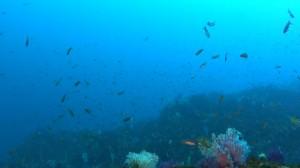 20180218伊豆海洋公園3