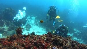 20180504伊豆海洋公園7