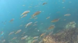 20180505伊豆海洋公園