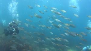 20180505伊豆海洋公園2
