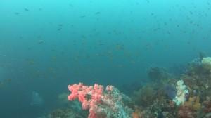20180701伊豆海洋公園13