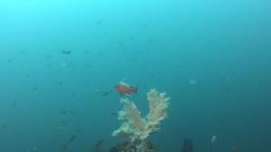 20180701伊豆海洋公園28