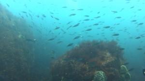 20180701伊豆海洋公園31