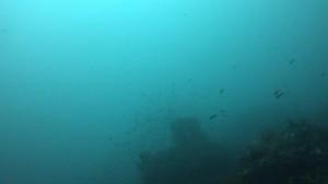 20180701伊豆海洋公園4