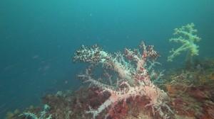 20200719伊豆海洋公園