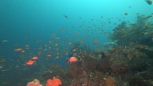20200723伊豆海洋公園