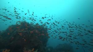 20200723伊豆海洋公園6