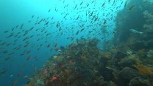 20200801伊豆海洋公園5