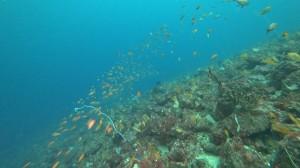 20200801伊豆海洋公園6