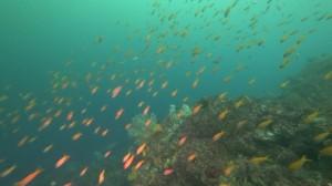 20200810伊豆海洋公園11