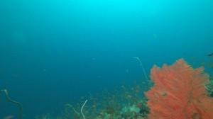 20200815伊豆海洋公園3