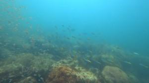 20200816伊豆海洋公園スキン14