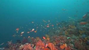 20200823伊豆海洋公園10