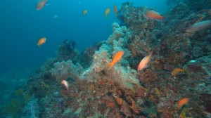 20200823伊豆海洋公園11
