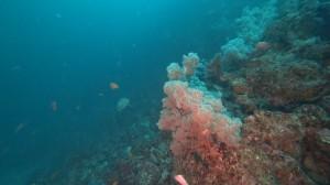 20200823伊豆海洋公園12