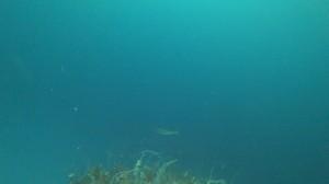 20200830伊豆海洋公園10