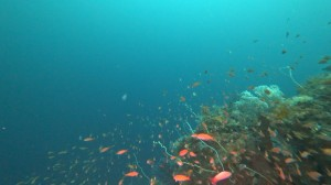 20200830伊豆海洋公園12