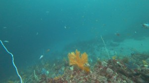 20200830伊豆海洋公園13