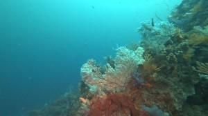 20200830伊豆海洋公園9