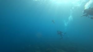 20201003伊豆海洋公園10