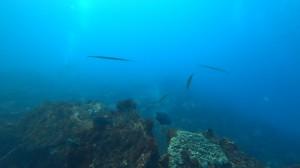 20201003伊豆海洋公園3