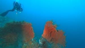 20201220伊豆海洋公園