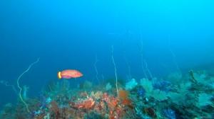 20201220伊豆海洋公園4