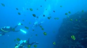 20201227伊豆海洋公園3