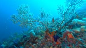 20201227伊豆海洋公園4