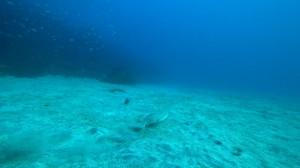 20210102伊豆海洋公園3