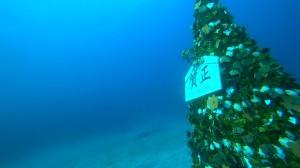 20210102伊豆海洋公園5
