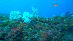 20210111伊豆海洋公園12