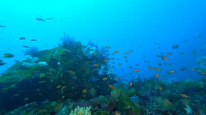 20210111伊豆海洋公園14