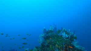 20210111伊豆海洋公園15