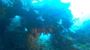 20210111伊豆海洋公園17