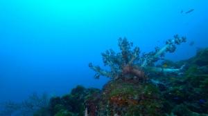 20210111伊豆海洋公園9